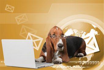 newsletters wordpress 2